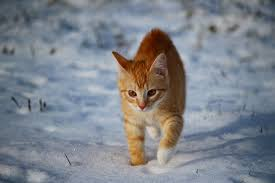 CHAT NEIGE1